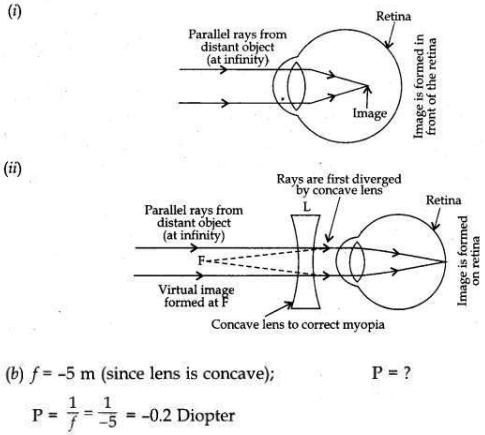 CBSE Sample Papers for Class 10 Science Solved Set 2 21 ii