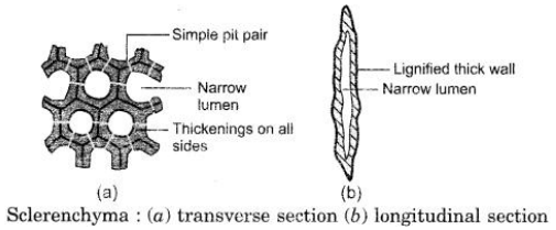 CBSE Sample Papers for Class 9 Science Solved Set 4 12