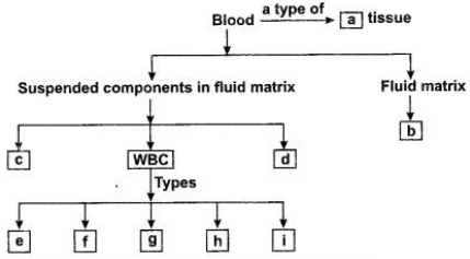 CBSE Sample Papers for Class 9 Science Solved Set 4 20Q