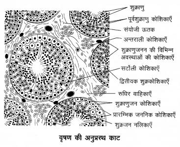 Arihant Home Science Class 12 Chapter 5 1