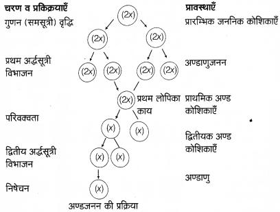 Arihant Home Science Class 12 Chapter 5 2