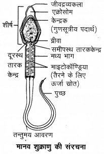 Arihant Home Science Class 12 Chapter 5 5
