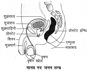 Arihant Home Science Class 12 Chapter 5 5M 1