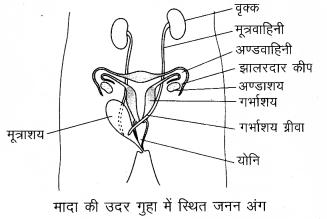 Arihant Home Science Class 12 Chapter 5 5m 2