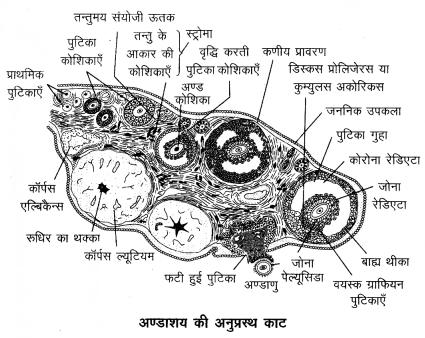 Arihant Home Science Class 12 Chapter 5 7