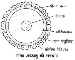 Arihant Home Science Class 12 Chapter 5 8