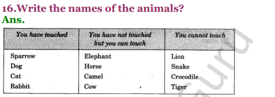 NCERT Solutions for Class 3 EVS Chapter 19 Our Friends-Animal 5