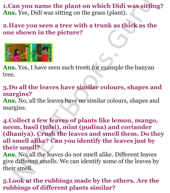 NCERT Solutions for Class 3 EVS Chapter 2 The Plant Fairy 1