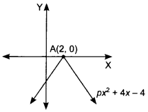 MCQ Questions for Class 10 Maths Polynomials with Solutions 12